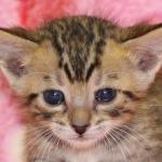 cat_20