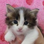 cat_23_150402