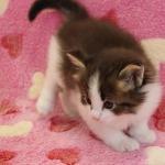 cat_23_150402_02