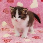cat_23_150402_03