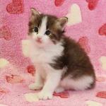 cat_23_150402_04