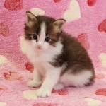 cat_23_150402_05