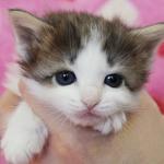 cat_24_150402