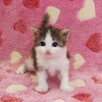 cat_24_150402_02