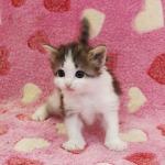 cat_24_150402_03