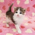 cat_24_150402_04