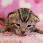 cat_26_03