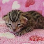 cat_26_04