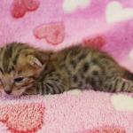 cat_27_04