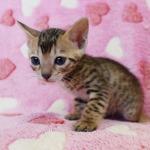 cat_28_03
