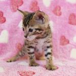 cat_29_04