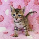 cat_29_05