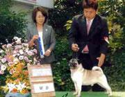 パグ JKCチャンピオン ドン ¥80,000-